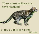 Colette saying and image of an ocicat