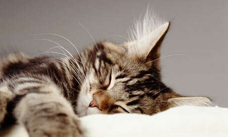 Let sleeping Moggs lie