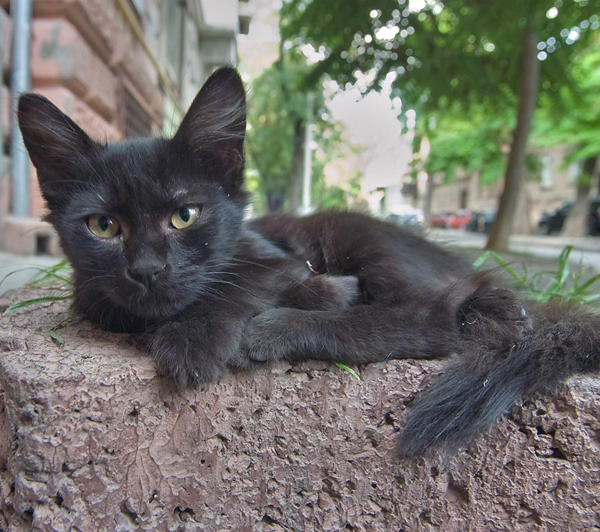 stray black cat