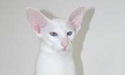 bute cat