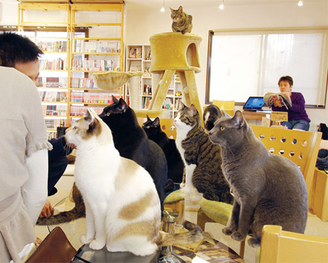 cafe cats at leisure