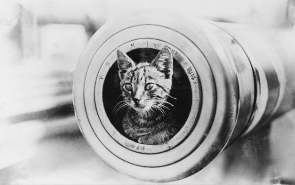 Cat in the warm gun barrel