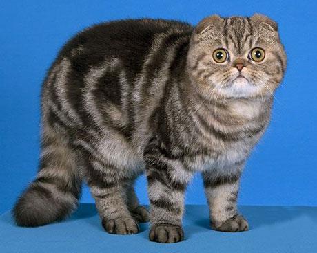 foldex cat by bluesky