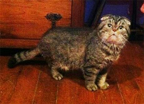 a foldex cat