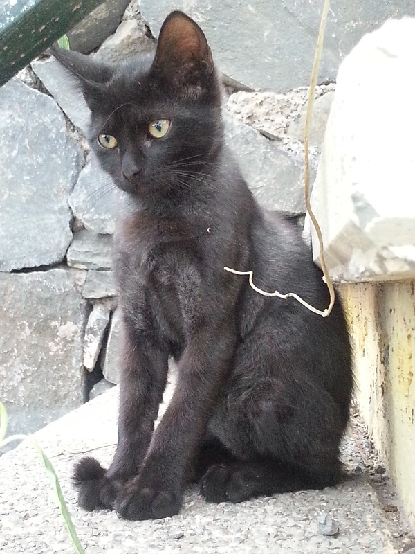 blackie the cat, as named by ed