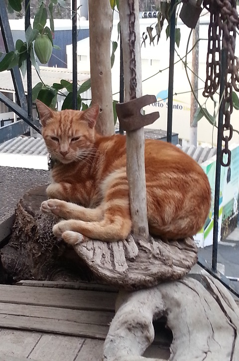 cat on some driftwood