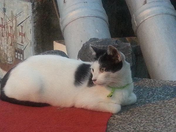 the spanish galleon cat