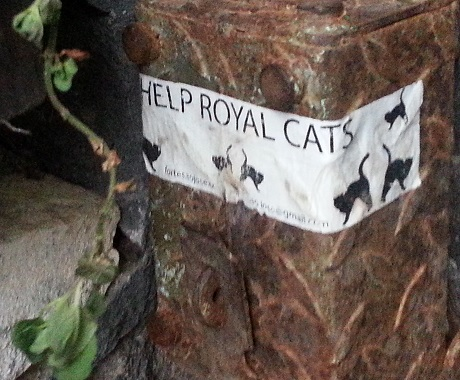 help the royal cats sign - they need food