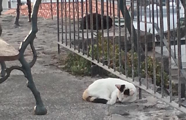 a sleeping cat on ponthina island