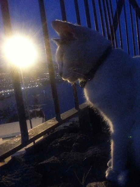 a cat keep watch over the town