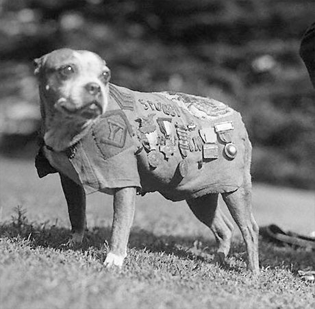 Sgt. Stubby the dog