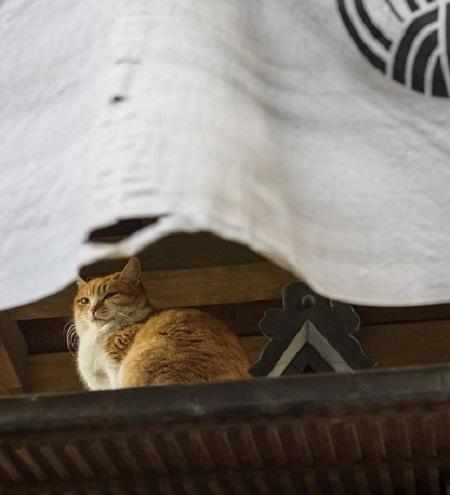 a tokyo cat