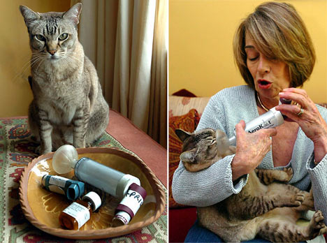 Bruno the cat with owner Anna Dickie