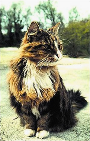 30 interesantes curiosidades sobre los gatos