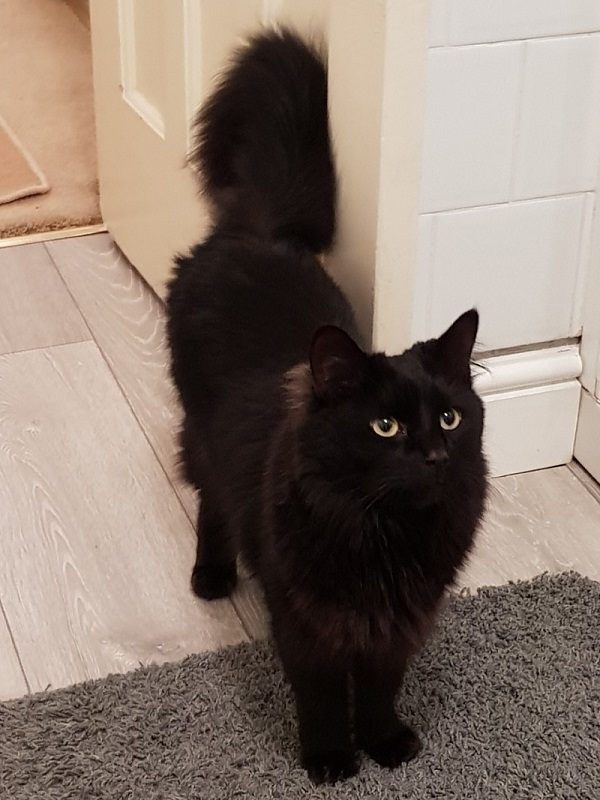 Oscar the cat needs attention