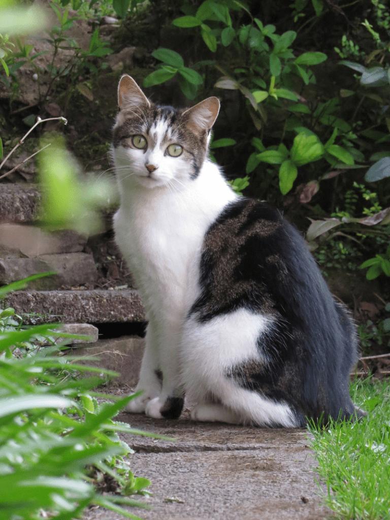 Kiera the cat